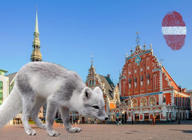 Прибалтийская демократия северного пушного зверька